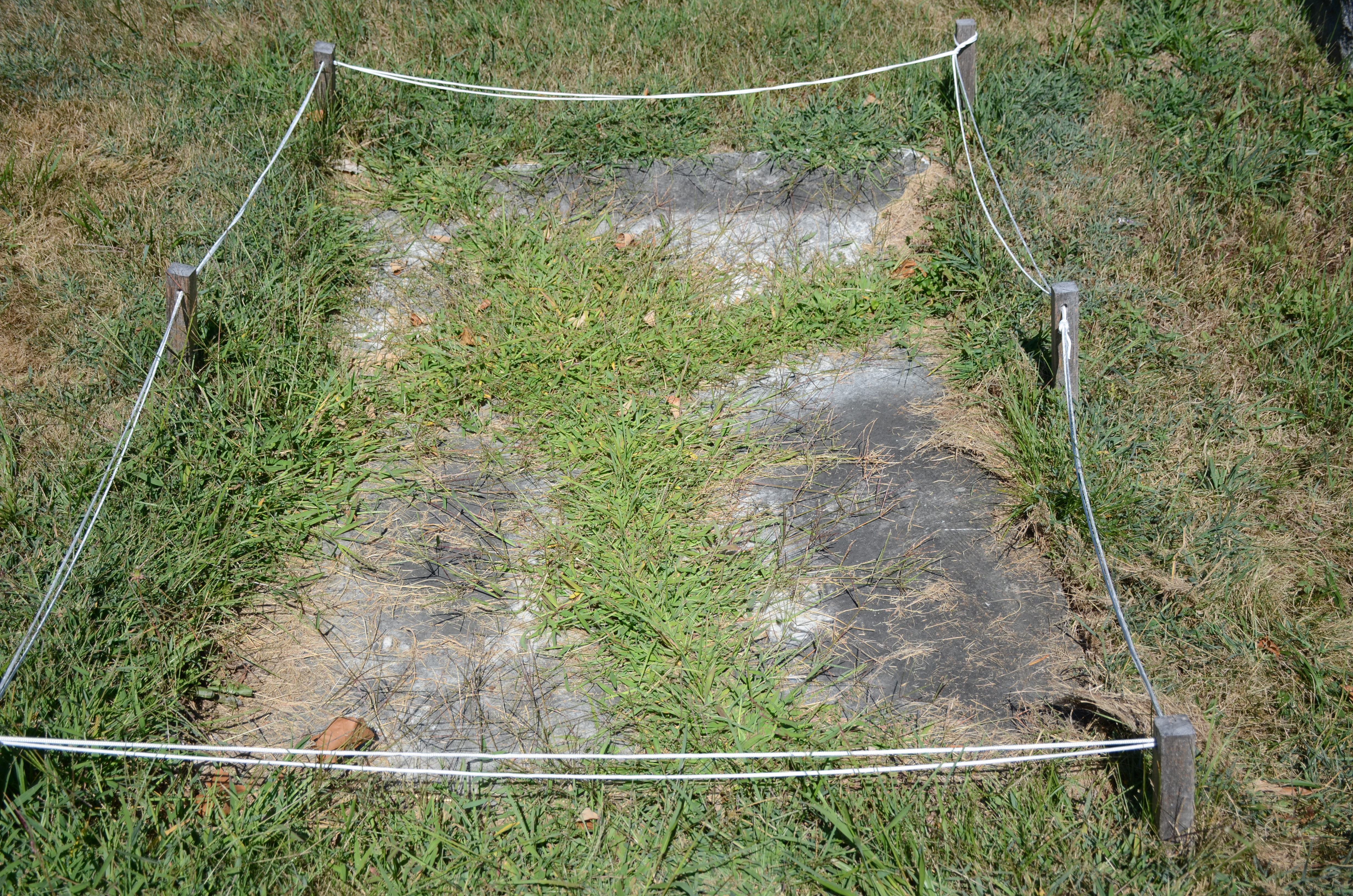 Chancellor Kent gravestone, grass-covered, soon after it was rediscovered in 2013